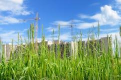 Parmi le blé croissant une maison moderne nouvellement établie Photographie stock libre de droits