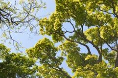 Parmi les dessus d'arbre Image libre de droits