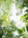 Parna tropikalna szklarnia z backlit drzewnymi liśćmi obraz royalty free