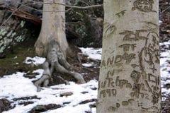 Parnamn som snidas i ett träd arkivbilder