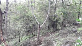 Parnera Hill forest in valsad Gujarat India `beauti of valsad`. This place is one  of the best beautiful places in south Gujarat  in India stock image