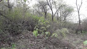 Parnera Hill forest in valsad Gujarat India `beauti of valsad`. This place is one  of the best beautiful places in south Gujarat  in India stock photo
