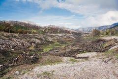 parnitha национального парка Стоковые Изображения RF
