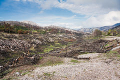 Parnitha National Park. Landscape in Parnitha National Park after the fire in 2007, in Greece Royalty Free Stock Images