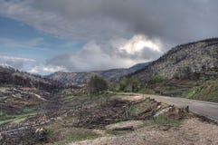 Parnitha National Park. Burned part of Parnitha national park in Greece stock photo