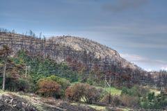 Parnitha National Park. Burned part of Parnitha national park in Greece stock image