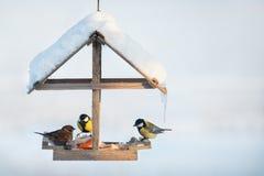 Paro carbonero y gorrión en el alimentador del pájaro Foto de archivo libre de regalías