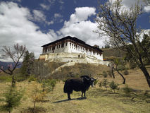 Paro Dzong - Kingdom of Bhutan. A Yak near Paro Dzong (Monastery) near the town of Paro in the Kingdom of Bhutan Stock Photo