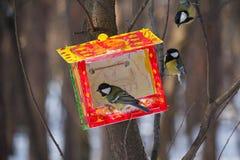 Paro ed alimentatore nel parco uccelli immagini stock libere da diritti