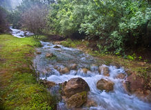 Parod River Israel. Flowing water the Parod river in the Galilee, Israel Royalty Free Stock Photos