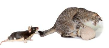 Parodia del gato que busca un ratón Imagen de archivo libre de regalías