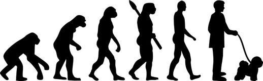 Parola di evoluzione di Bichon Frise Immagine Stock Libera da Diritti