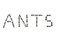 Parole della formica Fotografie Stock