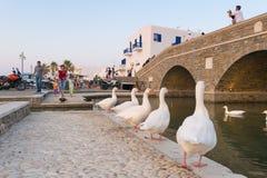 Paros, Греция 5-ое августа 2016 Люди наслаждаясь их летними каникулами на деревне Naoussa местной в острове Paros наблюдая белизн Стоковые Фото