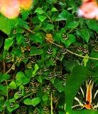 Paros dal av fjärilar Royaltyfri Foto