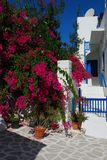 Paros island, bougainvillea in a courtyard. Greece. Typical bougainvillea flowered courtyard, island of Paros, Greece royalty free stock photography