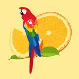 Parot Stock Photo