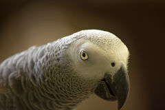 Parot Stock Photos