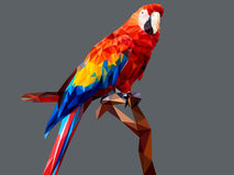 Parot low polygon  on gray background Stock Image