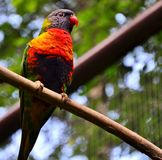 Parot. Photo shoot in the wild . Pictures of nature and animals living on our planet Royalty Free Stock Image