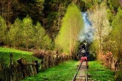 Parowy pociąg wymieniał Mocanita w Vaser dolinie, Maramures, Rumunia w wiosna czasie zdjęcia royalty free