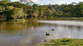 Parque做卡尔穆-圣保罗,巴西 图库摄影