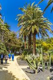 Parque加西亚萨纳夫里亚在圣克鲁斯-德特内里费 免版税库存图片