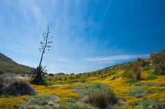 Parque自然Cabo de加塔角 免版税库存图片