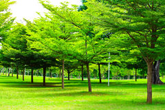 Parque Foto de archivo libre de regalías