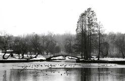 Parque Fotografía de archivo libre de regalías