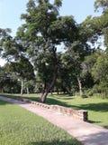 Parque royalty-vrije stock afbeeldingen