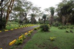 Parque africano Foto de Stock Royalty Free