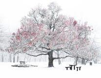 Parque agradable en invierno Foto de archivo