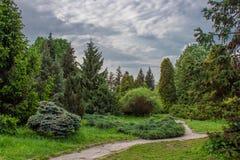 Parque ajardinado de árboles coníferos Imagen de archivo