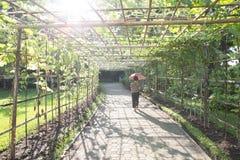 Parque ajardinado do jardim formal Imagens de Stock Royalty Free