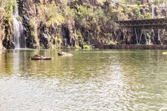 Parque, aka Dr. da cidade de Ribeirao Preto Luis Carlos Raya Fotografia de Stock Royalty Free