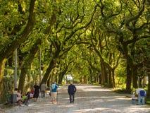 Parque Alameda - Santiago de Compostela photos stock