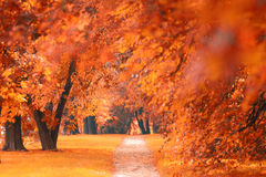 Parque alaranjado do outono Fotos de Stock Royalty Free