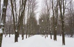 Parque alley2 do inverno Fotografia de Stock