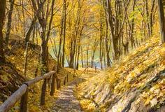Parque amarelo do outono Imagens de Stock Royalty Free