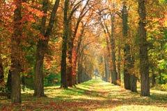 Parque amarelo outonal bonito Imagens de Stock