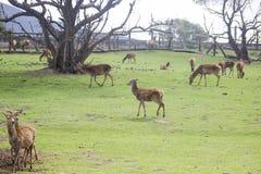 PARQUE ANIMAL DE LA NATURALEZA NATURALEZA ÁFRICA PARQUE fotografía de archivo libre de regalías