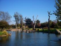 Parque asiático en plantas verdes del jardín del lago de Serena Chile del la foto de archivo libre de regalías