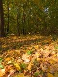 Parque asoleado del otoño imagen de archivo libre de regalías