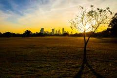 Parque Austin Texas Skyline de Zilker con los rayos de sol de la salida del sol a través del campo Fotografía de archivo libre de regalías