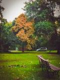 Parque, banco y en la distancia un árbol solo imagenes de archivo