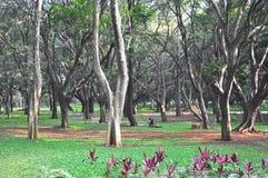 Parque Bangalore de Cubbon foto de archivo libre de regalías