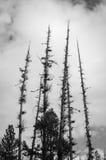 Parque blanco y negro de Shevlin del cielo de cinco árboles Foto de archivo libre de regalías