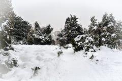Parque bloqueado pela neve Fotografia de Stock Royalty Free