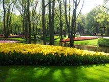 Parque bonito com lago e flores, Keukenhof, Países Baixos Foto de Stock Royalty Free